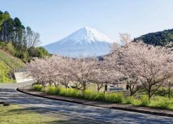 正在招募 | 日本现当代建筑寻踪·第20期·樱花季(2019年3月29日—4月6日)