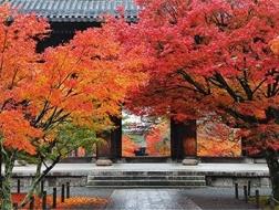 京都红叶季,如何优雅游园、惬意赏枫两不误?