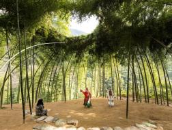 有生命的穹顶:竹林剧场 / DnA建筑事务所
