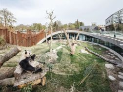 BIG新作:哥本哈根动物园熊猫馆,太极图案抬升出的观景台