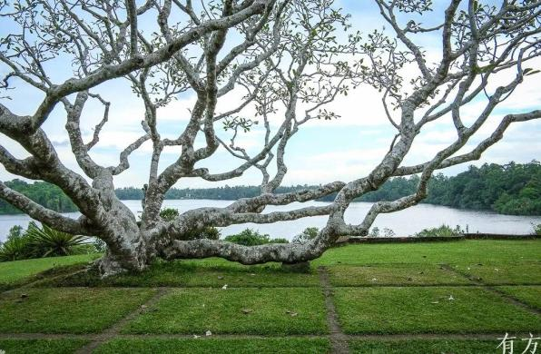 经典再读64 | 卢努甘卡庄园:建造自然