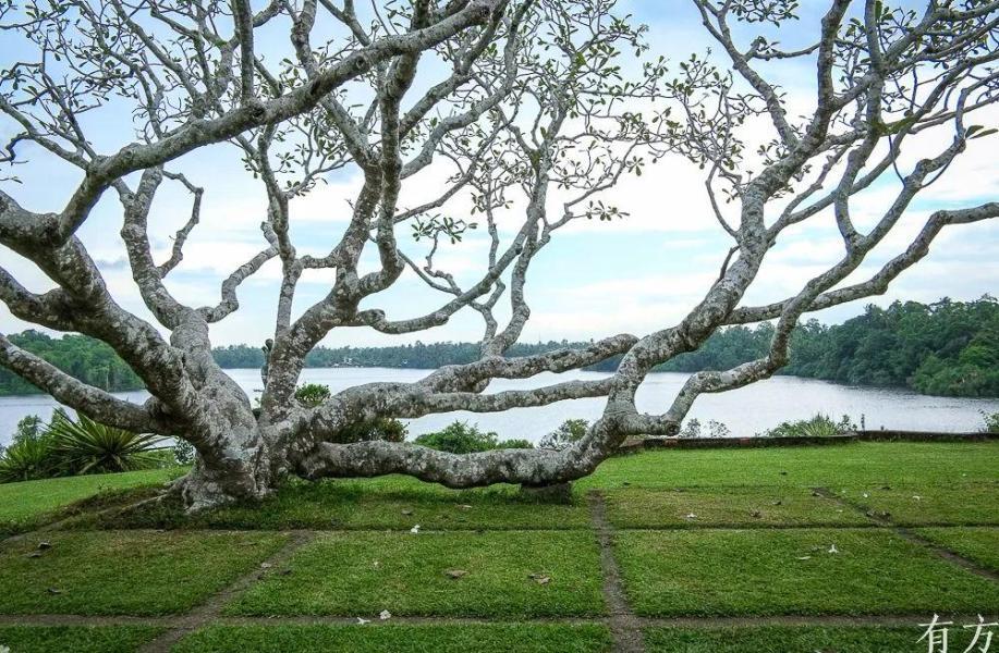 经典再读64   卢努甘卡庄园:建造自然