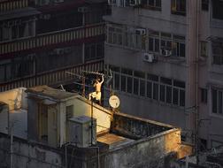 香港:屋顶上的故事